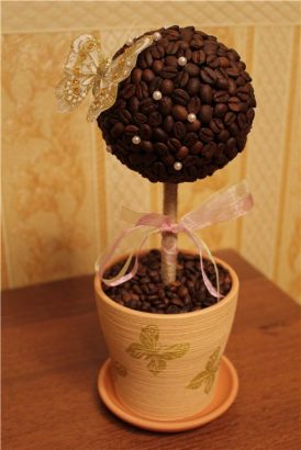 кофейное дерево своими руками