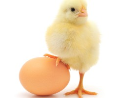 Все секреты приготовления яиц