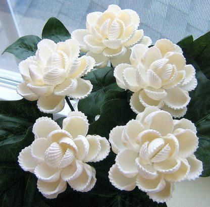 Цветы из ракушек своими руками пошагово фото 685